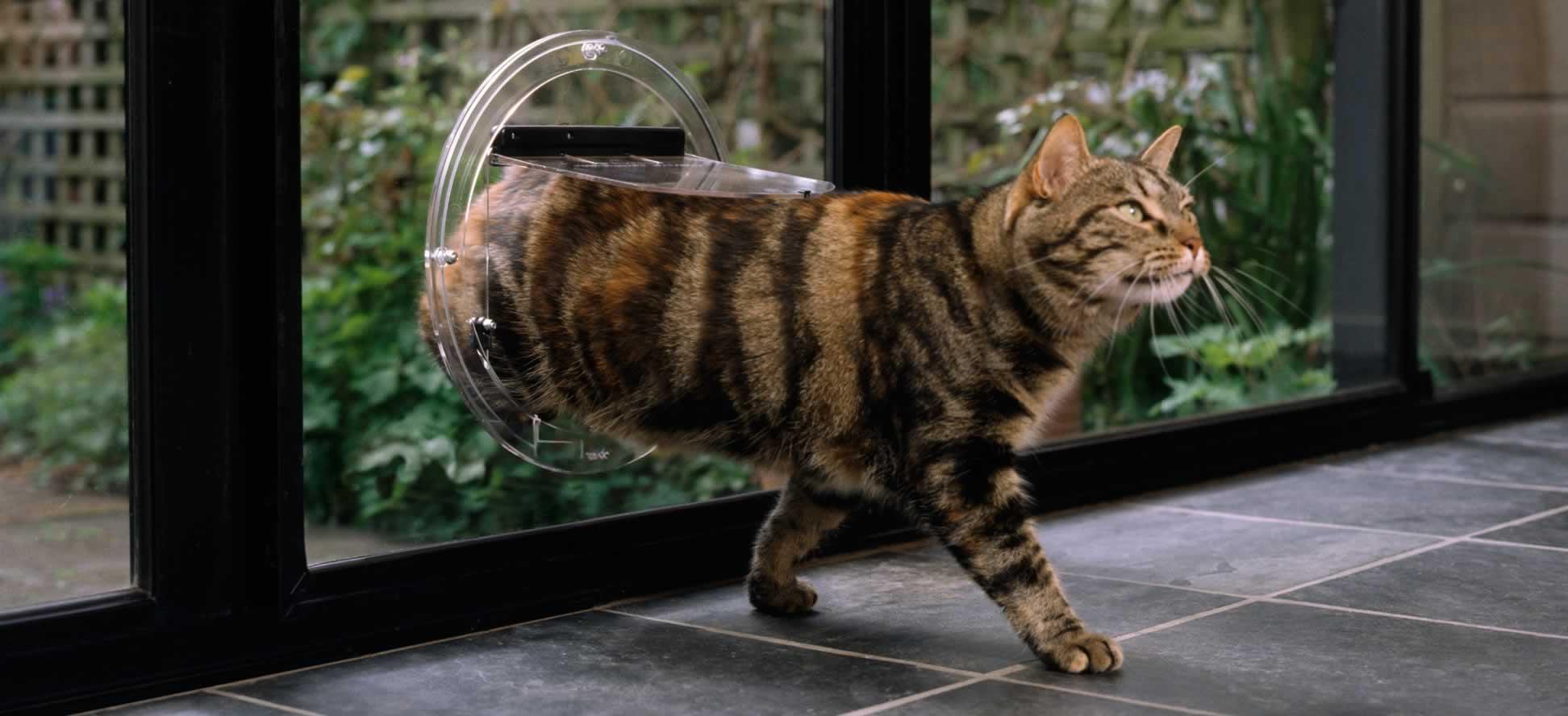 Transcat Clear Cat Door & Cat Door \u0026 Dog Door Supplier Australia \u0026 New Zealand | Transcat Pezcame.Com